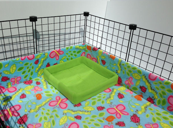 Baby Guinea Pig Litter Box