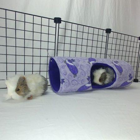 Peek-a-Boo Tunnel
